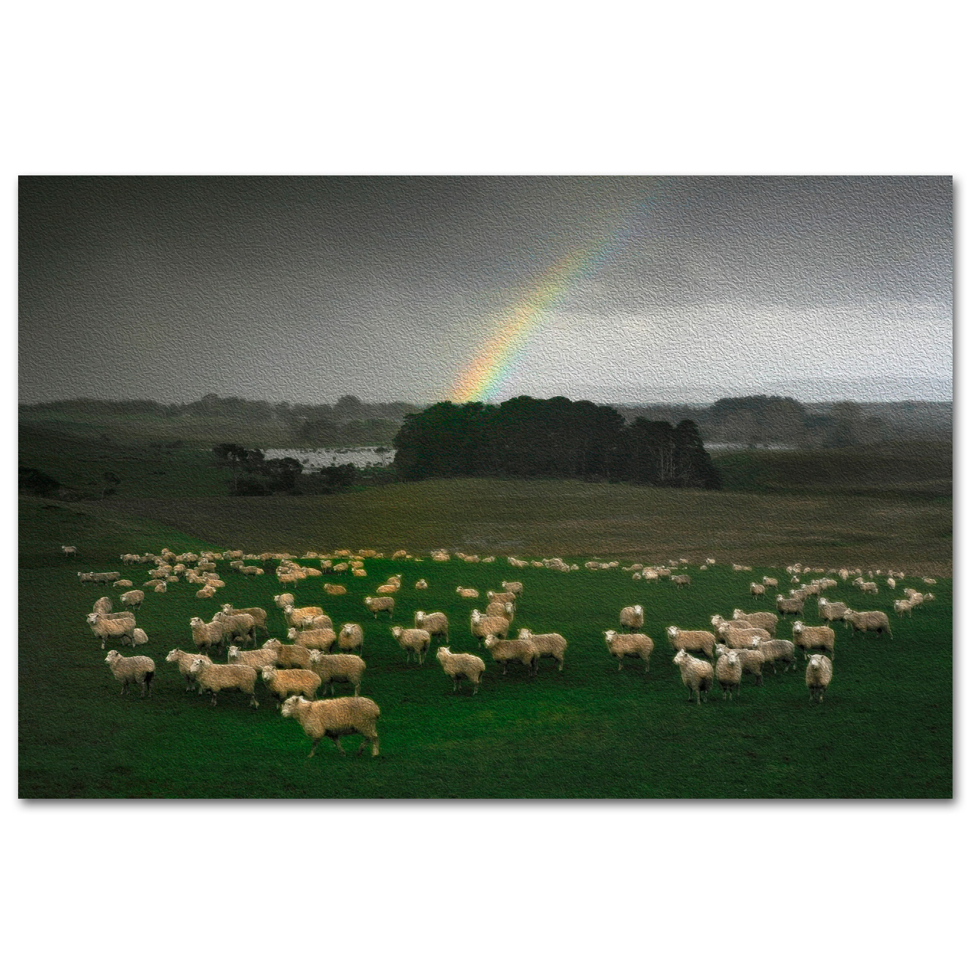 Sheep, woollen jumpers and a rainbow artwork.