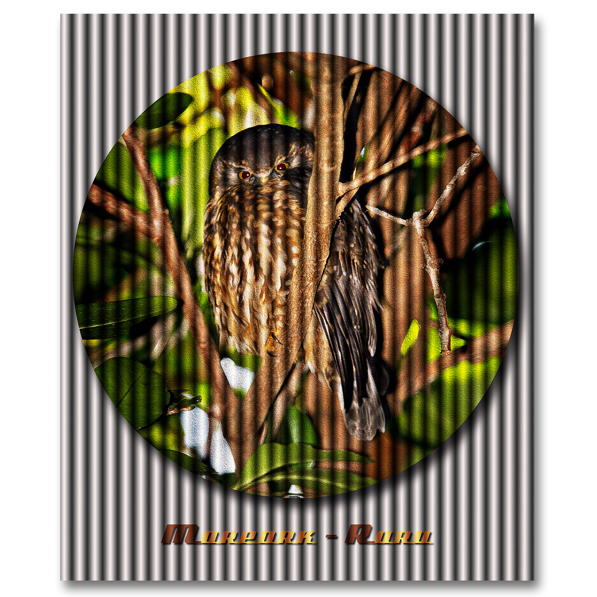 Morepork photography art.