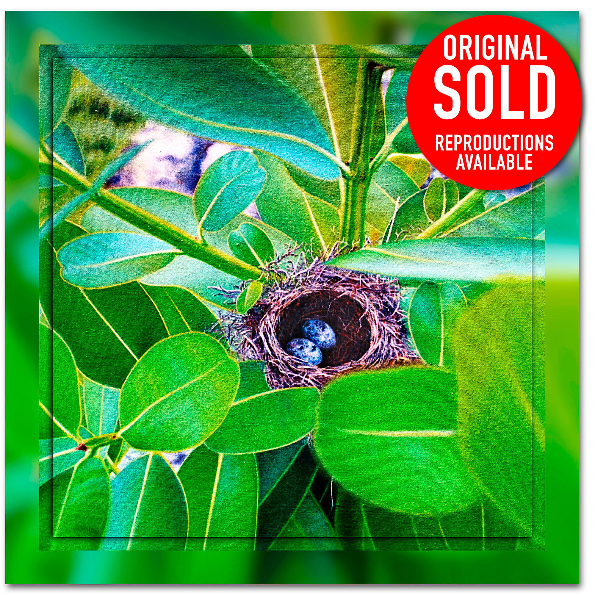 Long-billed white eye nest Nauru's Long Billed White Eye nest, Oil Painting by Ian Anderson Fine Art